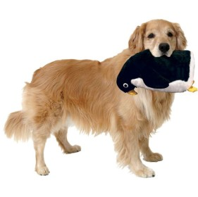 mighty_penguin_goldenretreiver